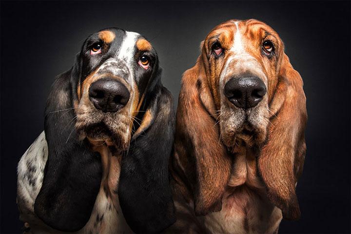 perros hambientos